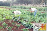 Horta caseira: lesma, caracol e mosca-branca