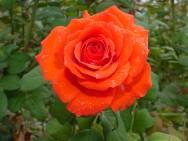 Produção de flores no ES aumenta com a chegada da primavera