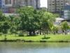 Arborização urbana acrescenta mais verde ao cinza das grandes cidades