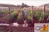 Favorece o surgimento de doenças graves do tomateiro como o mofo branco, pinta preta e requeima.