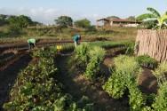 Projeto da Câmara beneficia agricultores em áreas consideradas urbanas