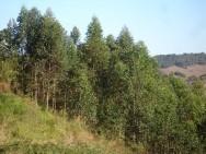 O novo código florestal e sua nova proposta