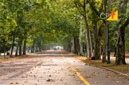 Arborização urbana tem papel indispensável  para a qualidade de vida na cidade