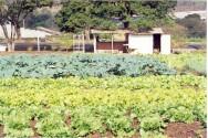 Embrapa Hortaliças (CNPH), pesquisas inovadoras na área de horticultura