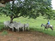 EPMURAS - Sistema de avaliação de bovinos