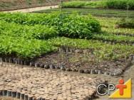 Reposição florestal: abastecimento da matéria-prima