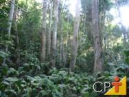 Reposição florestal: benefícios