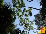 Reposição florestal: componente florestal em culturas agrícolas