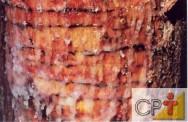 Cultivo e resinagem de pinus: fases líquida e sólida