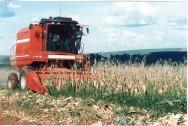 Ministério anuncia aumento da verba para o seguro rural
