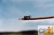 Cultivo de eucalipto em pequenas propriedades: formigas