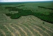 Projeto ambiental aumenta produtividade agrícola na Amazônia