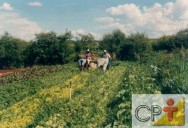 Como tornar sua fazenda orgânica: agroecologia