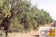 Como tornar sua fazenda orgânica: agricultura de clareiras