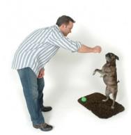 Aprenda Fácil Editora: Guarda Consciente e Adestramento de Cães