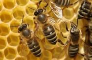 Aprenda Fácil Editora: Criação de abelhas sem ferrão beneficia cinco comunidades no Ceará