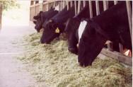 Aprenda Fácil Editora: Milho hidropônico é alternativa barata para alimentação animal na estiagem.