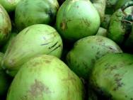 Aprenda Fácil Editora: Preço do Coco Verde Anão é Favorável para o Consumidor na CEASA/ES.