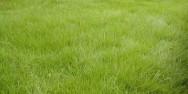 Aprenda Fácil Editora: Conheça o Tipo de Grama mais Adequado para cada Jardim.