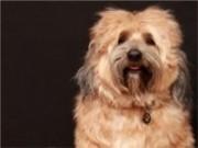 O cuidado excessivo com os animais de estimação faz aumentar a demanda por pet shop no país.