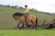 cavalos, raças de cavalos, doma