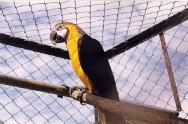 Manejo de papagaios, araras e maritacas