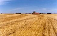 Faturamento da agropecuária deve crescer 8,7% em 2012