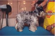 Cuidados a serem tomados ao dar banho em seu animal de estimação