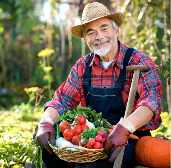 Curso para Plantar Organicos