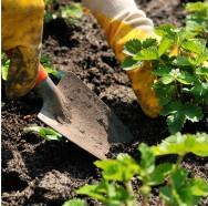 Cultivo orgânico de hortaliças: malefícios dos agrotóxicos