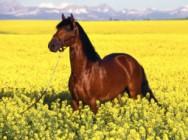 Aprenda Fácil Editora: Doma Racional para Cavalos.