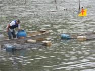 Criação de peixes, atividade de excelente resultado econômico