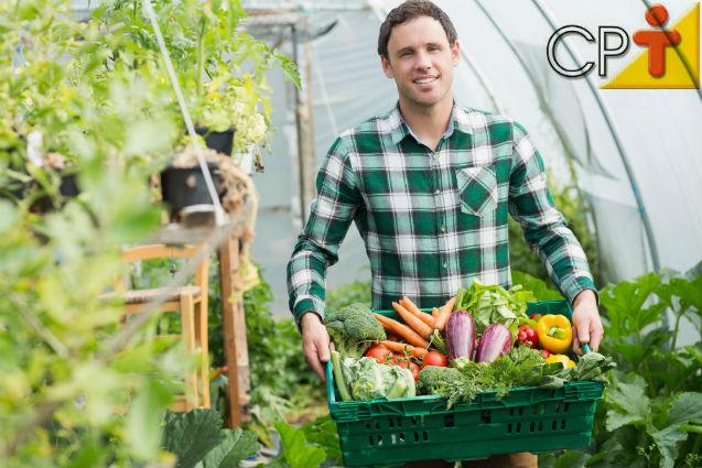 A construção de estufas facilita muito o plantio de hortaliças    Artigos Cursos CPT