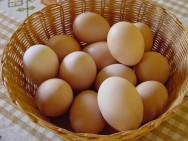 Dicas sobre produção e comercialização de ovos