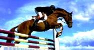 Aprenda Fácil Editora: Como se Aprimorar na Equitação?