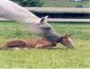 Técnicas que proporcionam maior eficiência na reprodução de cavalos