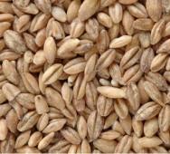 Embrapa produz alimentos mais baratos com resíduos industriais