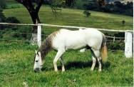 Nutrição e alimentação para equinos