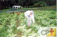 A fertilidade do solo é bastante influenciada pelos efeitos dos adubos verdes.