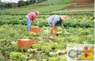 Cultivo orgânico de hortaliças:  método de manejo