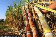 Aprenda Fácil Editora: Produção de Etanol na Fazenda é Viável e Rentável