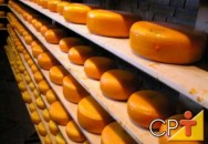 Produção de queijo minas frescal, mussarela e gouda: queijos com leite de cabra