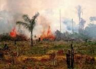Aprenda Fácil Editora: Governo Federal Pretende Recuperar Áreas de Pastagens Degradadas.