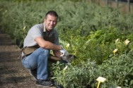 Agricultura natural: máximo proveito do potencial da natureza