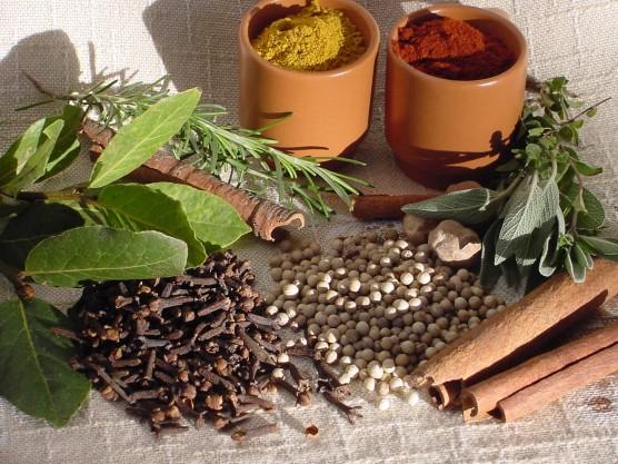Plantas medicinais artigos