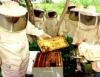 Mais qualidade e mais quantidade na apicultura com a Copa de 2014