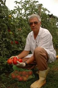 Aprenda Fácil Editora: Sistema de Produção Integrada de Tomate de Mesa Garante Renda ao Produtor de Forma Sustentável.