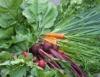 Horta orgânica toma conta de empresas norte-americanas