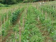 Financiamento para a agricultura empresarial cresce 25%
