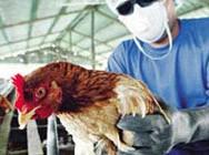 Doenças aviárias do tipo bacteriose